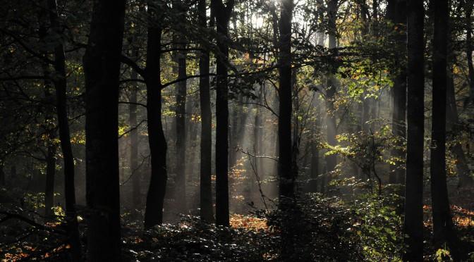 En morgon i Bokskogen